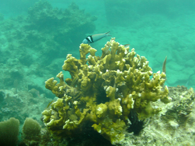 Coral and tropical fish to be seen while snorkeling
